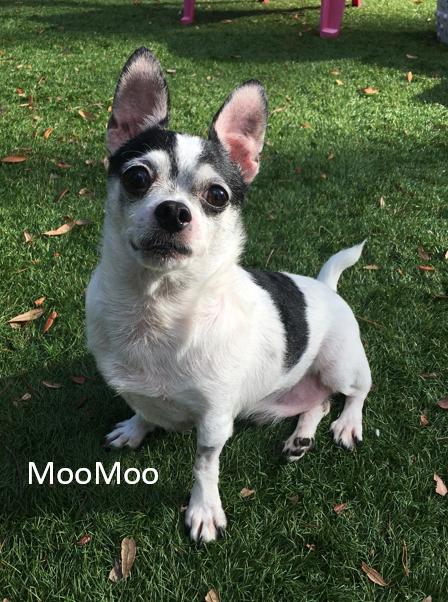 MooMoo2